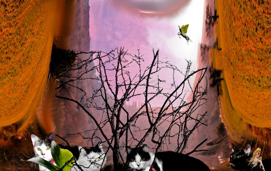 mes chats, j'adore les chats :)